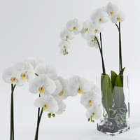 Orchid decorative