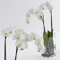 3d model realistic orchids