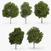 3d greek maple trees model