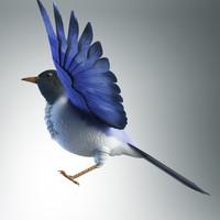 3ds bird