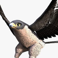 falcon 3d model