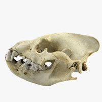 3d model hyena skull animations