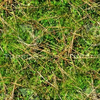 Mossy ground with needles 1