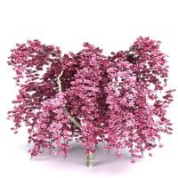 c4d cherry tree