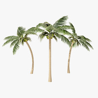 3d model coconut palms
