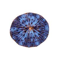fungia plate coral 3d model
