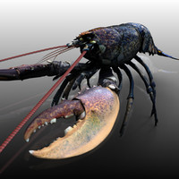 lobster arnold 3d xsi