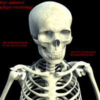 skeleton character skull max