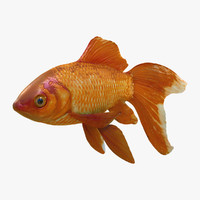 3d model of common goldfish