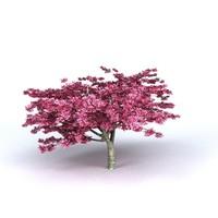 Cherry Tree v2