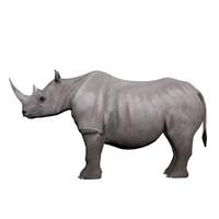 3d rhinoceros horn