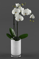 3d model white orchids glass pot