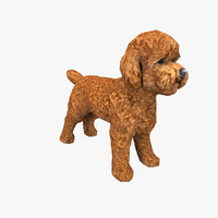 maya poodle