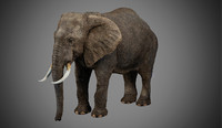 3ds max photorealistic elephant