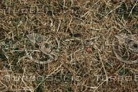 Grass_Texture_0011