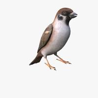 3dsmax sparrow
