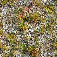 Gravel and weeds 7