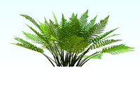 athyrium filix-femina lady fern 3d model