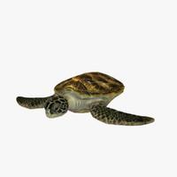 turtle ma
