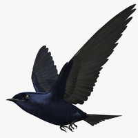 3d progne subis purple martin model