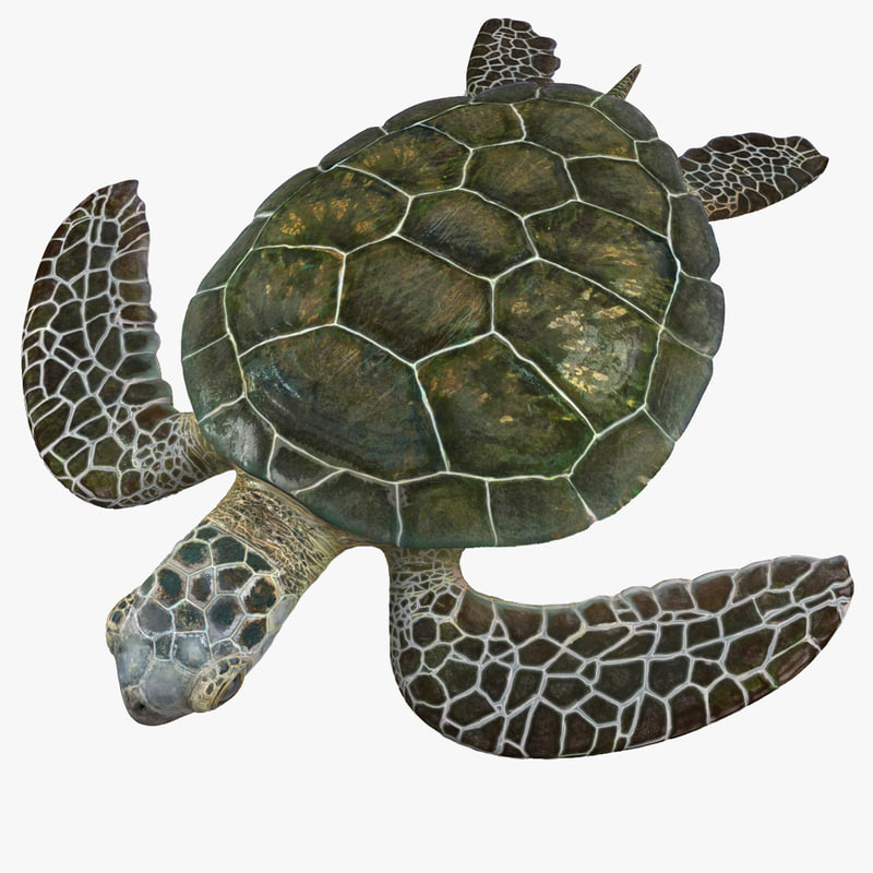Sea Turtle 3d model 00.jpg
