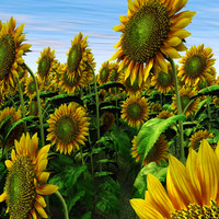 sunflower helianthus plants 3d model