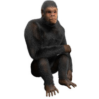 chimpanzee rigged fur obj