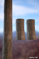 Tree 01 Photo Scanned