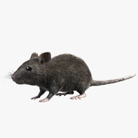 grey house mouse - 3d model