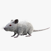 white house mouse - 3d obj