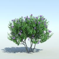 lilac tree obj