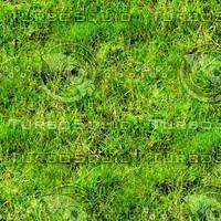 Wild grass 16