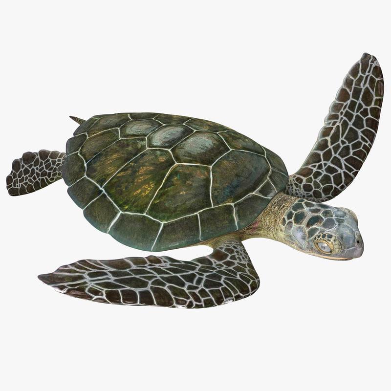 3d modelof Sea Turtle 00.jpg