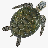 3d sea turtle pose 2