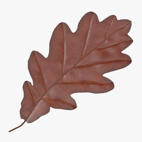 oak leaf brown 3d model