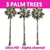3 Palm Trees HD