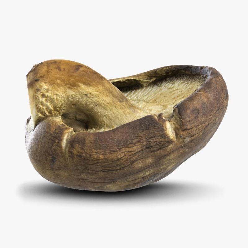 Mushroom6-3chk247.jpg