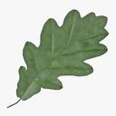 oak leaves 3D models