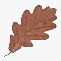 3d oak leaf orange v1 model