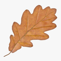 3d model of oak leaf yellow v1