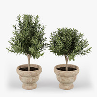 3d olive trees fruits model