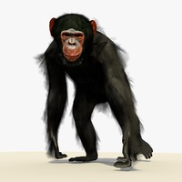 3d chimpanzee walking pose fur model