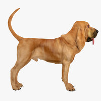 bloodhound tan dog 3d model