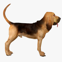 Bloodhound (Black & Tan)