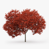 red maple tree 7 3d model