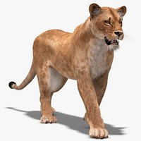 3d max lioness rigging animation cat