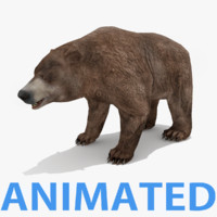 3d max bear rigged animations