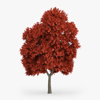 3d model red maple tree 8m
