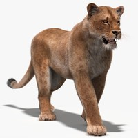 3d model lioness fur rigging animation