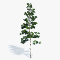 3d professionally conifer trees model